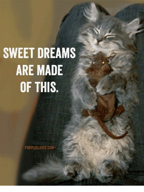 Memes, Purple, and Dreams: SWEET DREAMS  ARE MADE  OF THIS  PURPLE CLOVER COM