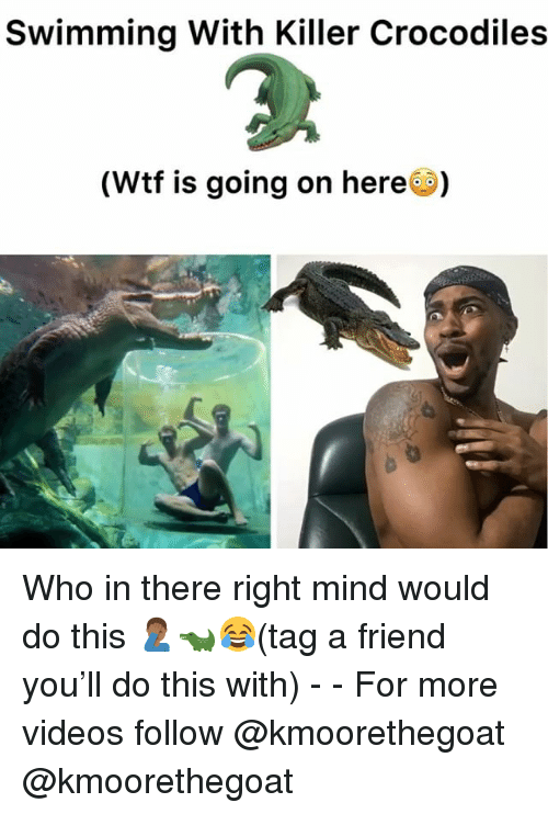 Memes, Videos, and Wtf: Swimming With Killer Crocodiles  (Wtf is going on here) Who in there right mind would do this 🤦🏾‍♂️🐊😂(tag a friend you'll do this with) - - For more videos follow @kmoorethegoat @kmoorethegoat