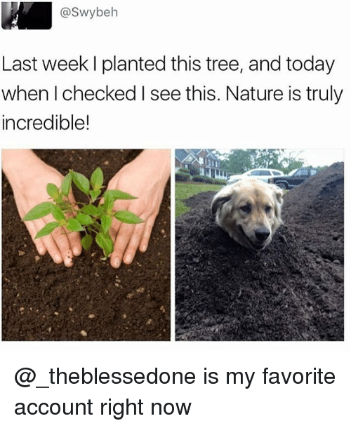 Funny and Incredibles: @Swybeh  Last week l planted this tree, and today  when checked I see this. Nature is truly  incredible! @_theblessedone is my favorite account right now