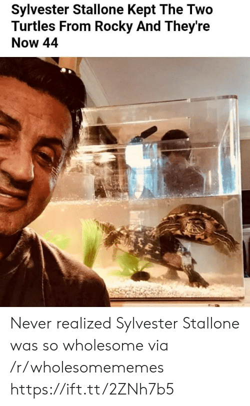 Rocky: Sylvester Stallone Kept The Two  Turtles From Rocky And They're  Now 44 Never realized Sylvester Stallone was so wholesome via /r/wholesomememes https://ift.tt/2ZNh7b5