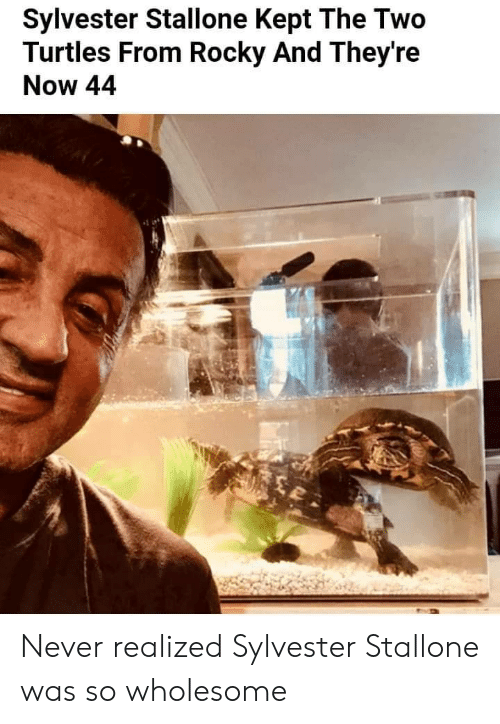 Rocky: Sylvester Stallone Kept The Two  Turtles From Rocky And They're  Now 44 Never realized Sylvester Stallone was so wholesome