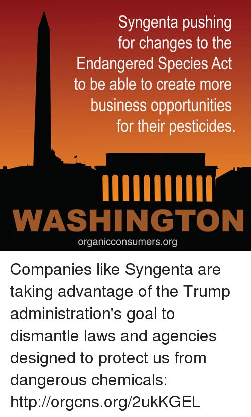syngenta: Syngenta pushing  for changes to the  Endangered Species Act  to be able to create more  business opportunities  for their pesticides.  imiu  WASHINGTON  organicconsumers.org Companies like Syngenta are taking advantage of the Trump administration's goal to dismantle laws and agencies designed to protect us from dangerous chemicals: http://orgcns.org/2ukKGEL