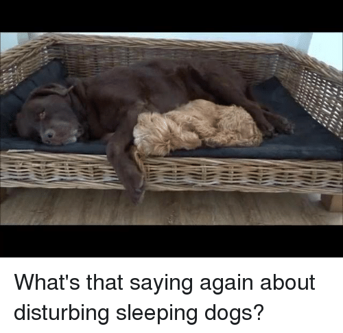 """sleeping dog: t??  坤!?!"""" """"If f1 What's that saying again about disturbing sleeping dogs?"""