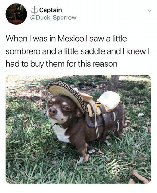 Dank, Saw, and Duck: t Captain  @Duck_Sparrow  When l was in Mexico l saw a little  sombrero and a little saddle and I knew l  had to buy them for this reason