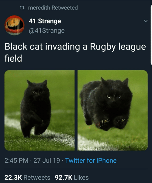 Rugby: t meredith Retweeted  41 Strange  @41 Strange  Black cat invading a Rugby league  field  2:45 PM 27 Jul 19 Twitter for iPhone  22.3K Retweets 92.7K Likes
