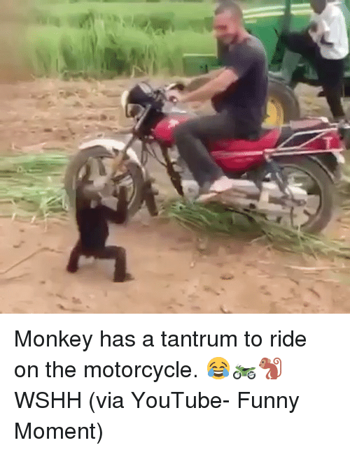 Funny Moment: T Monkey has a tantrum to ride on the motorcycle. 😂🏍🐒 WSHH (via YouTube- Funny Moment)