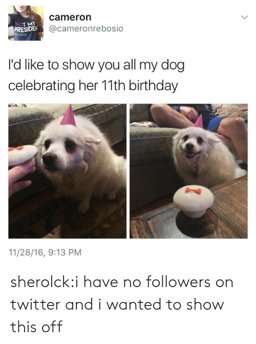 cameron: T MY  PRESIDEN  cameron  @cameronrebosio  No  I'd like to show you all my dog  celebrating her 11th birthday  11/28/16, 9:13 PM sherolck:i have no followers on twitter and i wanted to show this off
