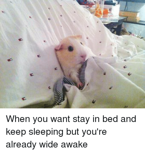 Stay In Bed Meme 28 Images Stay In Bed Meme Quotes Stay In Bed Meme Quotes Stay In Bed 70