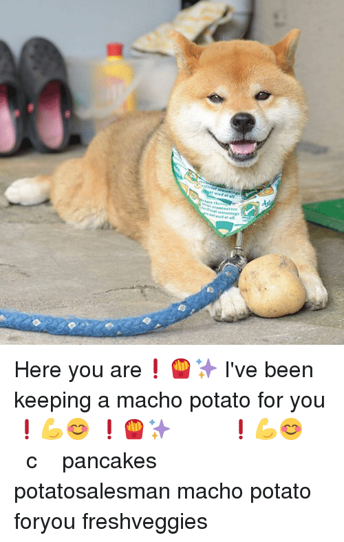 Memes, Potato, and Been: t used at all  have thr  essmination  rtiicial seasening  het ssed at all Here you are❗🍟✨ I've been keeping a macho potato for you❗💪😊 これどうぞ❗🍟✨ きみのためにマッチョなじゃがいもを取っておいたよ❗💪😊 一番でっかいやつ じゃがいも売り 加熱に強いビタミンcだよ 夏バテ予防にどうぞ きんぴらもうまいよ 八百じ pancakes potatosalesman macho potato foryou freshveggies
