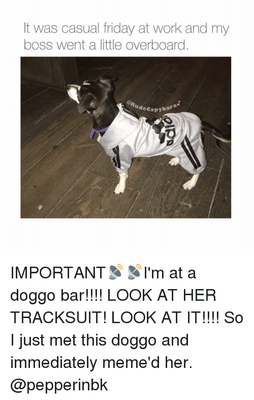 Memes, 🤖, and Boss: t was casual friday at work and my  boss went a little overboard  apybara IMPORTANT📡📡I'm at a doggo bar!!!! LOOK AT HER TRACKSUIT! LOOK AT IT!!!! So I just met this doggo and immediately meme'd her. @pepperinbk