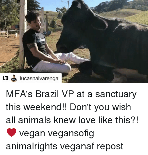 Animals, Love, and Memes: t1 lucasnalvarenga MFA's Brazil VP at a sanctuary this weekend!! Don't you wish all animals knew love like this?! ❤️ vegan vegansofig animalrights veganaf repost
