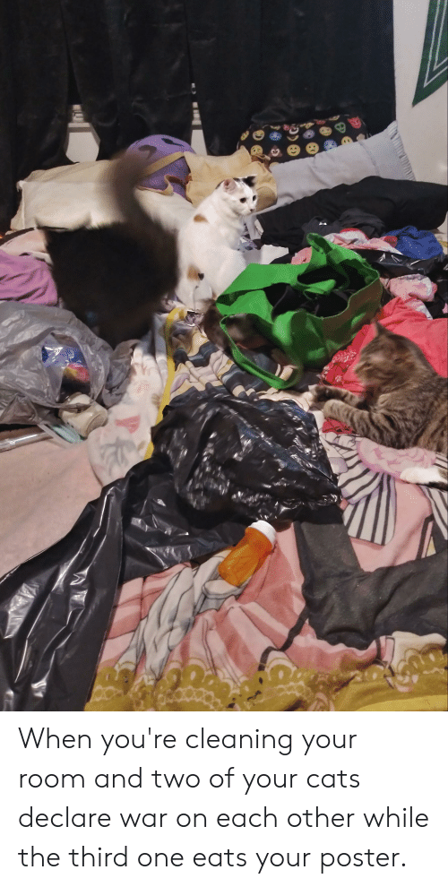 Cleaning Your Room: TA When you're cleaning your room and two of your cats declare war on each other while the third one eats your poster.