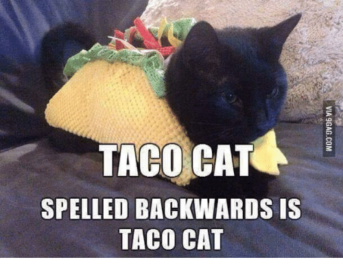 Cats, Memes, and 🤖: TACO CAT  SPELLED BACKWARDS IS  TACO CAT