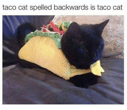 Cats, Italian (Language), and Spelling: taco cat spelled backwards is taco cat