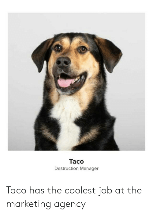 agency: Taco  Destruction Manager Taco has the coolest job at the marketing agency