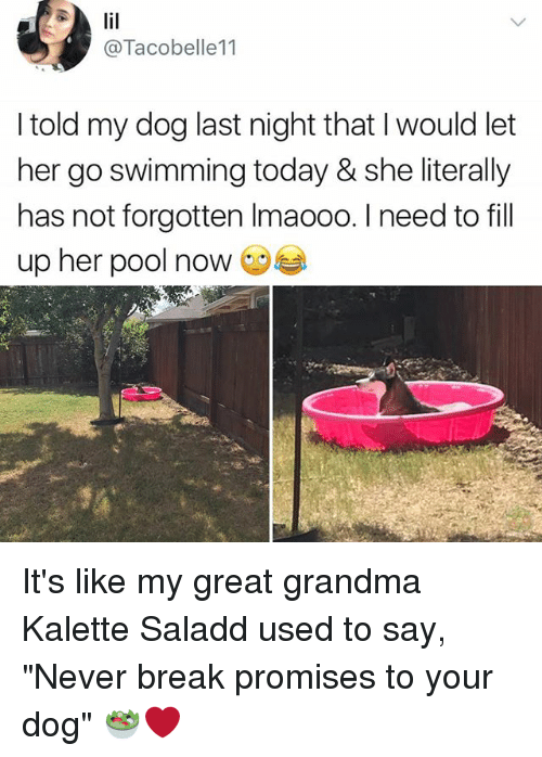 """Grandma, Memes, and Break: @Tacobelle11  I told my dog last night that I would let  her go swimming today & she literally  has not forgotten lmaooo. I need to fill  up her pool now It's like my great grandma Kalette Saladd used to say, """"Never break promises to your dog"""" 🥗❤️"""