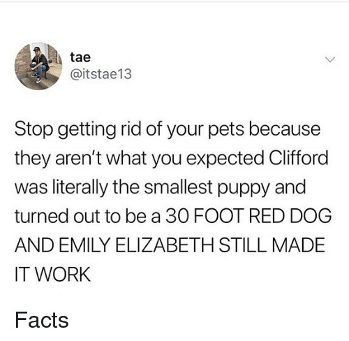 Facts, Memes, and Work: tae  @itstae13  Stop getting rid of your pets because  they aren't what you expected Clifford  was literally the smallest puppy and  turned out to be a 30 FOOT RED DOG  AND EMILY ELIZABETH STILL MADE  IT WORK Facts