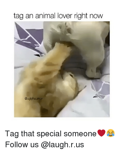 animal lover: tag an animal lover right now  Buglyhuumor Tag that special someone❤️😂 Follow us @laugh.r.us