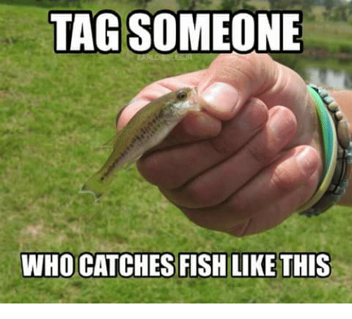 Memes, Fish, and Tagged: TAG SOMEONE  WHO CATCHES FISH LIKE THIS