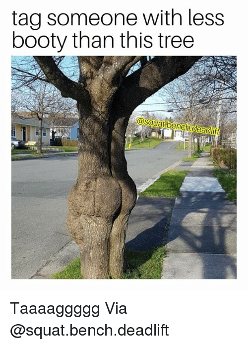 Booty, Tree, and Tag Someone: tag someone with less  booty than this tree  osquatibenchideadilift Taaaaggggg Via @squat.bench.deadlift