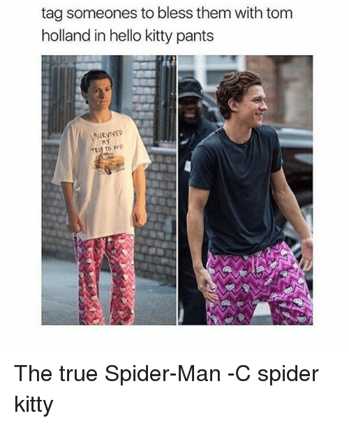 tom hollander: tag someones to bless them with tom  holland in hello kitty pants  URVIVED The true Spider-Man -C spider kitty