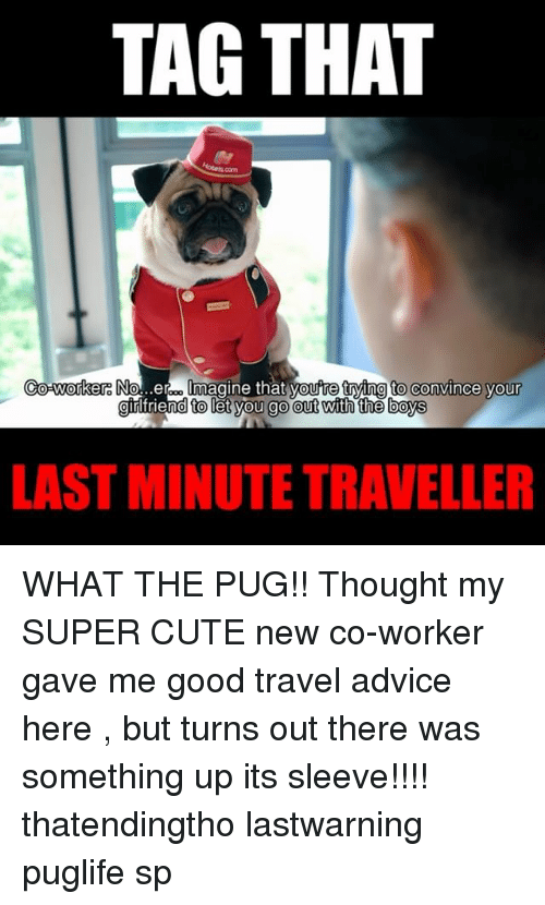 Advice, Cute, and Memes: TAG THAT  Co-worker:  No...erom Imagine that  youtre frying to convince your  d to let you go out with the boys  LAST MINUTE TRAVELLER WHAT THE PUG!! Thought my SUPER CUTE new co-worker gave me good travel advice here <link in bio>, but turns out there was something up its sleeve!!!! thatendingtho lastwarning puglife sp