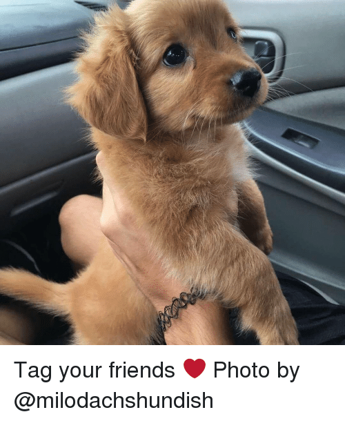 Memes, 🤖, and Photos: Tag your friends ❤️ Photo by @milodachshundish