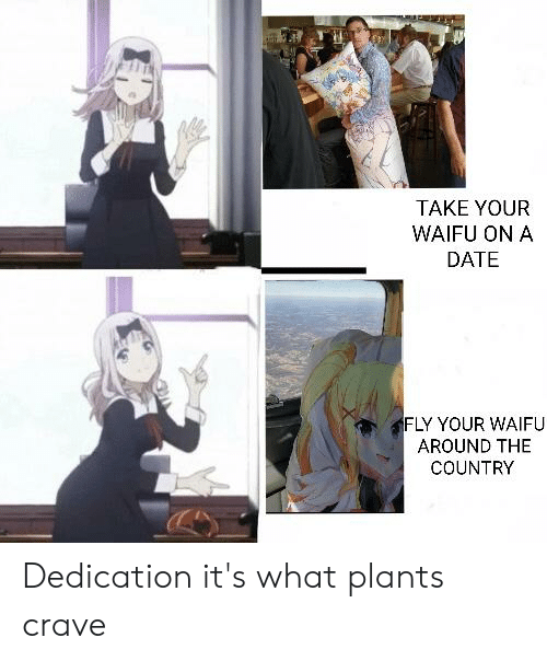Anime, Date, and Waifu: TAKE YOUR  WAIFU ON A  DATE  FLY YOUR WAIFU  AROUND THE  COUNTRY Dedication it's what plants crave