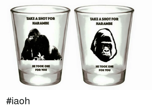Funny and Harambe: TAKEA SHOT FOR  HARAMBE  HE TOOK ONE  FOR YOU  TAKE A SHOT FOR  NARAMBE  HE TOOK ONE  FOR YOU #iaoh