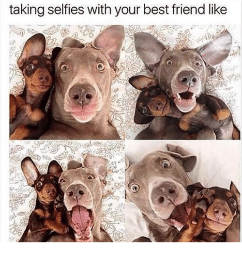 Funny: taking selfies with your best friend like