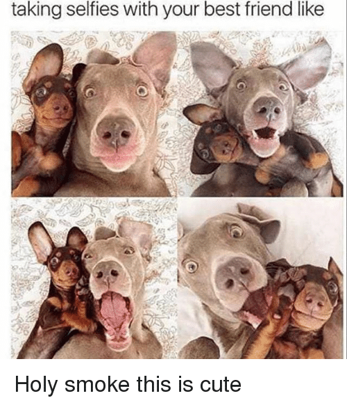 Best Friend, Cute, and Funny: taking selfies with your best friend like Holy smoke this is cute