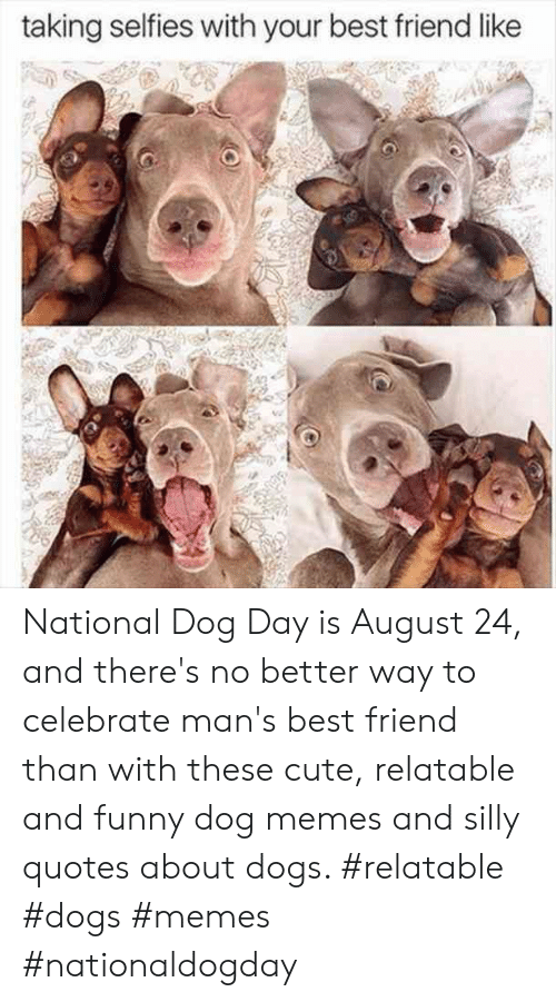 Silly Quotes: taking selfies with your best friend like National Dog Day is August 24, and there's no better way to celebrate man's best friend than with these cute, relatable and funny dog memes and silly quotes about dogs.  #relatable #dogs #memes #nationaldogday
