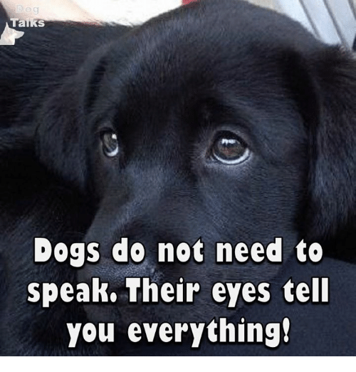 talking dogs: Talks  Dogs do not need  to  speak. Their eyes tell  you everything!