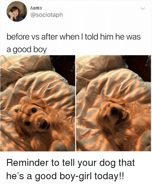Funny, Girl, and Good: tams  @sociotaph  before vs after when l told him he was  a good boy Reminder to tell your dog that he's a good boy-girl today!!