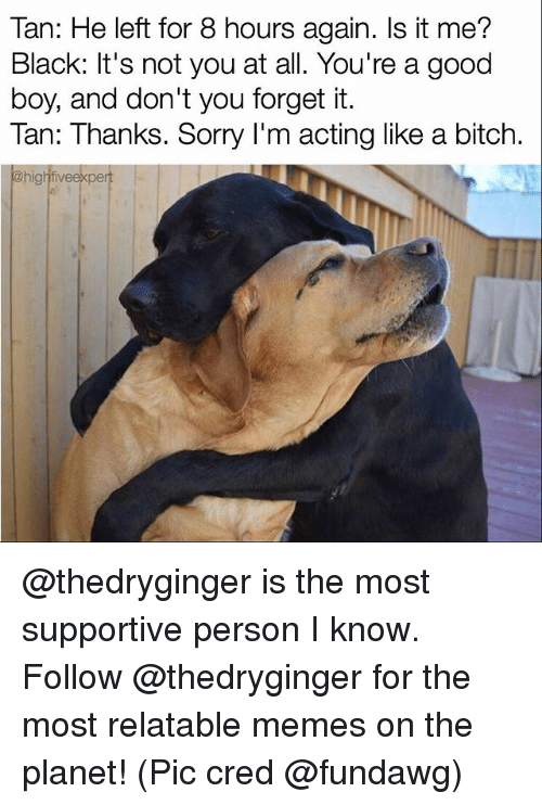 Bitch, Memes, and Sorry: Tan: He left for 8 hours again. Is it me?  Black: It's not you at all. You're a good  boy, and don't you forget it.  Tan: Thanks. Sorry I m acting like a bitch.  @high fiveexpert @thedryginger is the most supportive person I know. Follow @thedryginger for the most relatable memes on the planet! (Pic cred @fundawg)