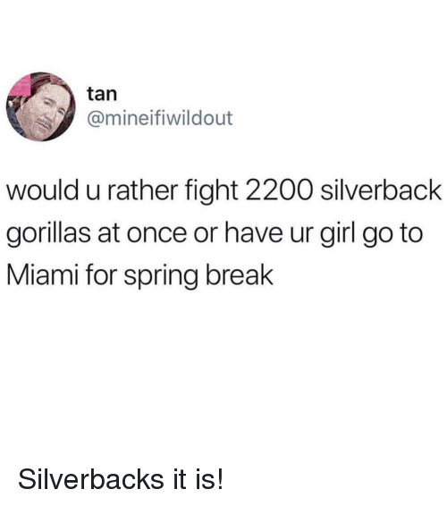 Spring Break: tan  @mineifiwildout  would u rather fight 2200 silverback  gorillas at once or have ur girl go to  Miami for spring break Silverbacks it is!