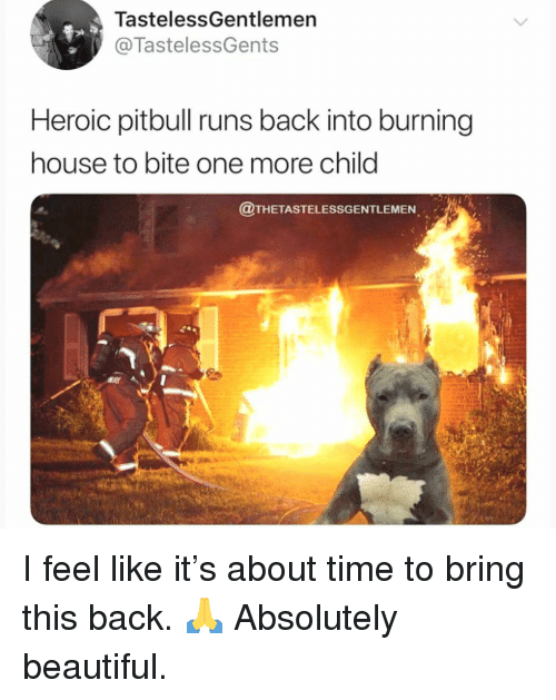 Beautiful, Memes, and Pitbull: TastelessGentlemen  @TastelessGents  Heroic pitbull runs back into burning  house to bite one more child  @THETASTELESSGENTLEMEN I feel like it's about time to bring this back. 🙏 Absolutely beautiful.