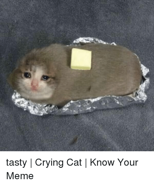 Crying, Meme, and Cat: tasty | Crying Cat | Know Your Meme