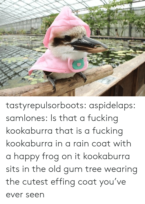 frog: tastyrepulsorboots: aspidelaps:  samlones:  Is that a fucking kookaburra  that is a fucking kookaburra in a rain coat with a happy frog on it  kookaburra sits in the old gum tree wearing the cutest effing coat you've ever seen