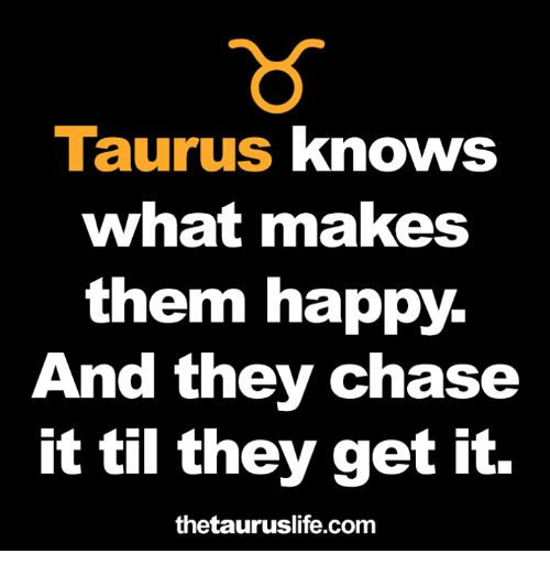 Chase, Happy, and Taurus: Taurus knows  what makes  them happy.  An  d they chase  it til they get it.  thetauruslife.com