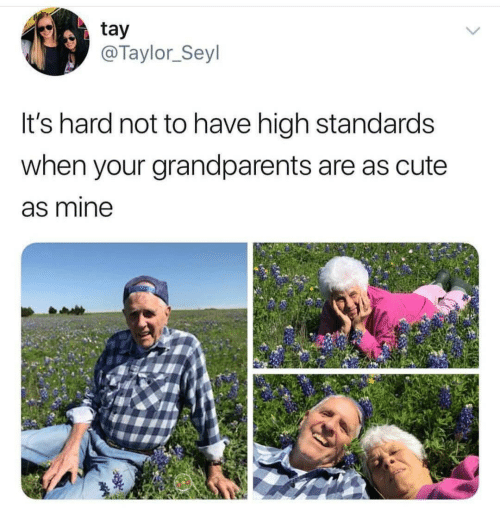 Cute, Mine, and Taylor: tay  @Taylor_Seyl  It's hard not to have high standards  when your grandparents are as cute  as mine  Q0