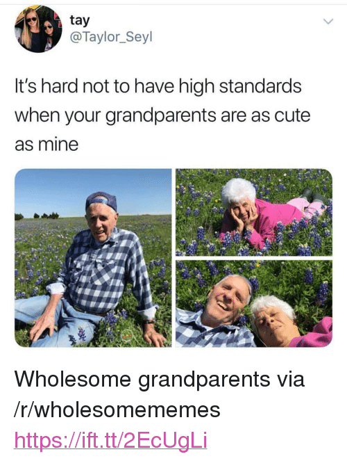 """Cute, Wholesome, and Mine: tay  @Taylor_Seyl  It's hard not to have high standards  when your grandparents are as cute  as mine <p>Wholesome grandparents via /r/wholesomememes <a href=""""https://ift.tt/2EcUgLi"""">https://ift.tt/2EcUgLi</a></p>"""