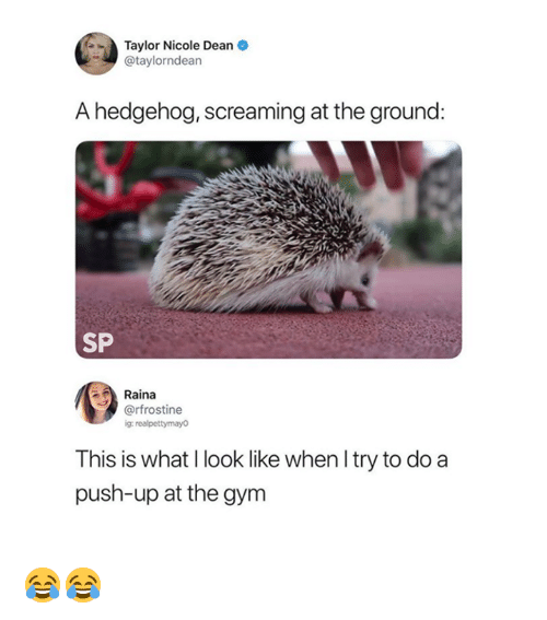 Gym, Hedgehog, and Push: Taylor Nicole Dean  @taylorndean  A hedgehog, screaming at the ground:  SP  Raina  @rfrostine  g: realpettymayo  This is what I look like when l try to do a  push-up at the gym 😂😂