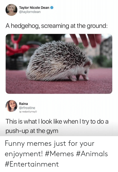 Enjoyment: Taylor Nicole Dean  @taylorndean  A hedgehog, screaming at the ground:  Raina  @rfrostine  ig: realpettymay0  This is what I look like when I try to do a  push-up at the gym Funny memes just for your enjoyment! #Memes #Animals #Entertainment