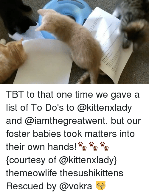 Memes, Tbt, and Time: TBT to that one time we gave a list of To Do's to @kittenxlady and @iamthegreatwent, but our foster babies took matters into their own hands!🐾🐾🐾 {courtesy of @kittenxlady} themeowlife thesushikittens Rescued by @vokra 😽