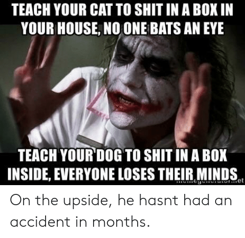 no one bats an eye: TEACH YOUR CAT TO SHIT IN A BOX IN  YOUR HOUSE, NO ONE BATS AN EYE  TEACH YOUR DOG TO SHIT IN A BOX  INSIDE, EVERYONE LOSES THEIR MINDS On the upside, he hasnt had an accident in months.