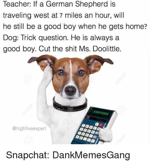 trick questions: Teacher: If a German Shepherd is  traveling west at 7 miles an hour, will  he still be a good boy when he gets home?  Dog: Trick question. He is always a  good boy. Cut the shit Ms. Doolittle.  230573500  Chighfiveexpert Snapchat: DankMemesGang