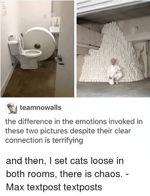 Cats, Memes, and Pictures: teamnowalls  the difference in the emotions invoked in  these two pictures despite their clear  connection is terrifying and then, I set cats loose in both rooms, there is chaos. - Max textpost textposts