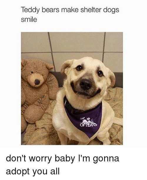 Dog Smile: Teddy bears make shelter dogs  smile don't worry baby I'm gonna adopt you all