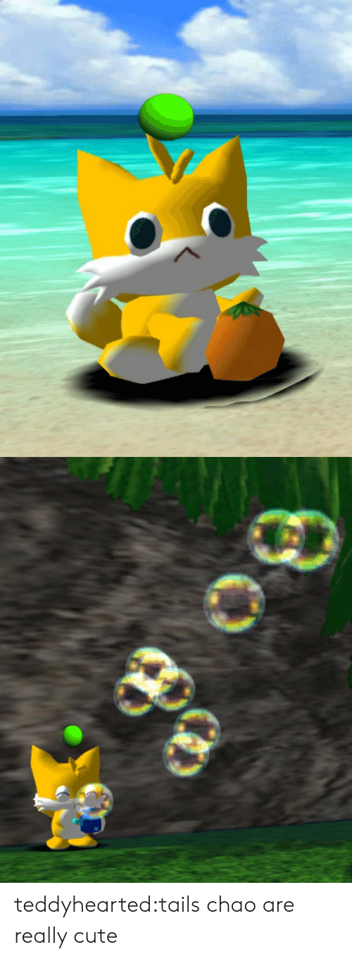 Chao: teddyhearted:tails chao are really cute